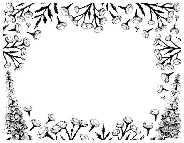 Hand gezeichnet von tansy und digitalis oder fingerhut pflanzen