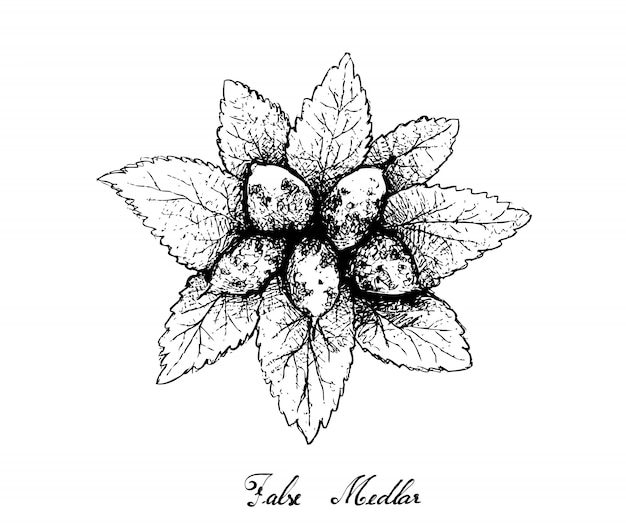 Hand gezeichnet von zwergartigen whitebeam-früchten auf weißem hintergrund