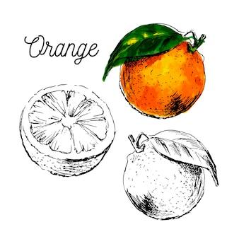 Hand gezeichnete aquarellmalerei auf weißem hintergrund. illustration der fruchtorange Premium Vektoren