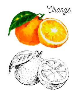 Hand gezeichnete aquarellmalerei auf weißem hintergrund. illustration der fruchtorange
