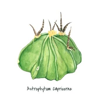 Hand gezeichnete astrophytum capricorne ziege