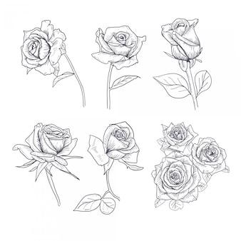 Hand gezeichnete blumen-gesetzte rose collection