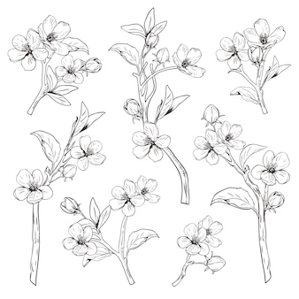 Hand gezeichnete botanische blütenniederlassungen auf weißem hintergrund.
