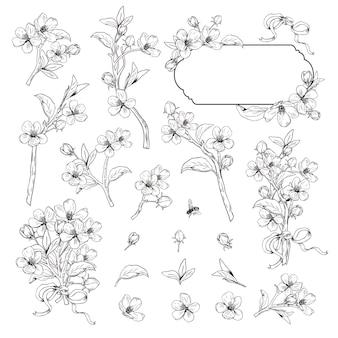 Hand gezeichnete botanische blütenzweige auf weißem hintergrund