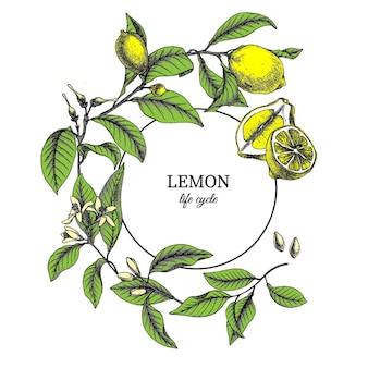 Hand gezeichnete botanische weinleseillustration von zitronenblättern, -blumen, -samen und -früchten