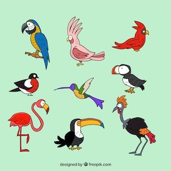 Hand gezeichnete exotische vogelsammlung