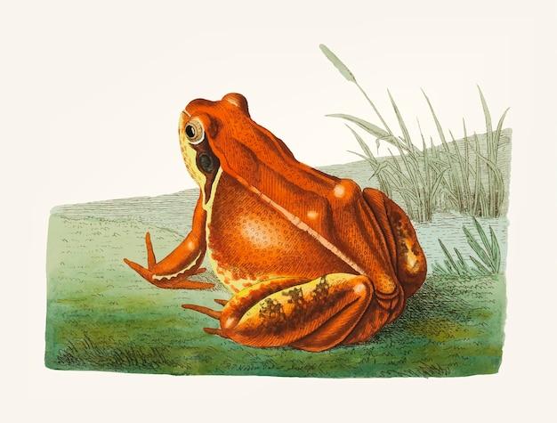 Hand gezeichnete frosch