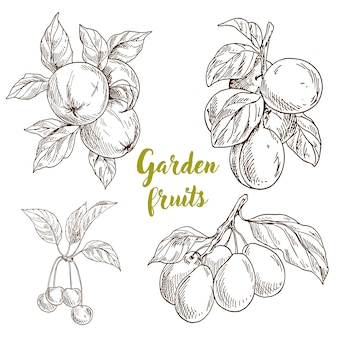 Hand gezeichnete gartenfruchtsammlung