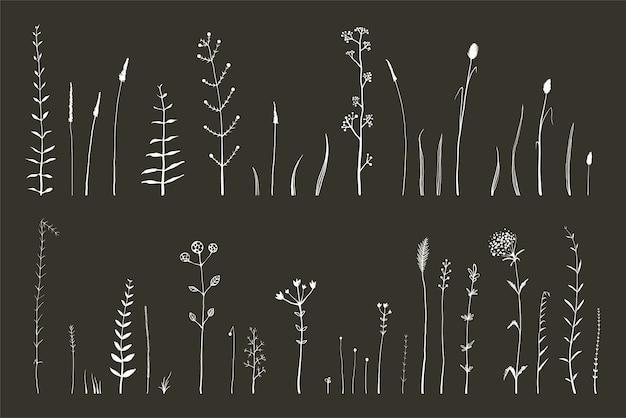 Hand gezeichnete gekritzel medizinische herbarium wildgras und blumen sammlung.