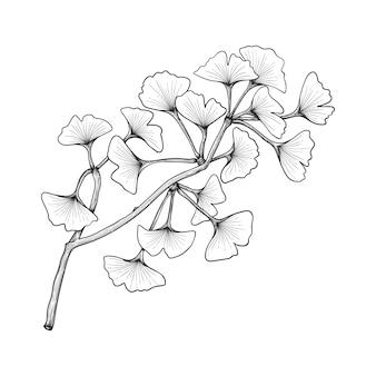 Hand gezeichnete ginkgoblattzeichnungillustration lokalisiert auf weiß