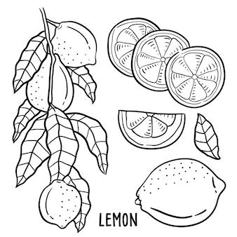 Hand gezeichnete Illustration der Zitrone.