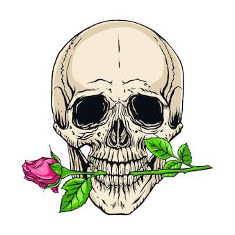 Hand gezeichnete illustration des menschlichen schädels der anatomie mit einer rose im mund