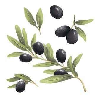 Hand gezeichnete illustration des olivenzweigs