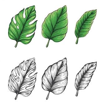 Hand gezeichnete illustration des tropischen blattvektors