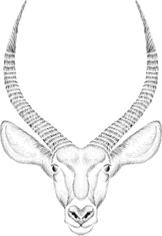Hand gezeichnete illustration in der kreideart der antilope