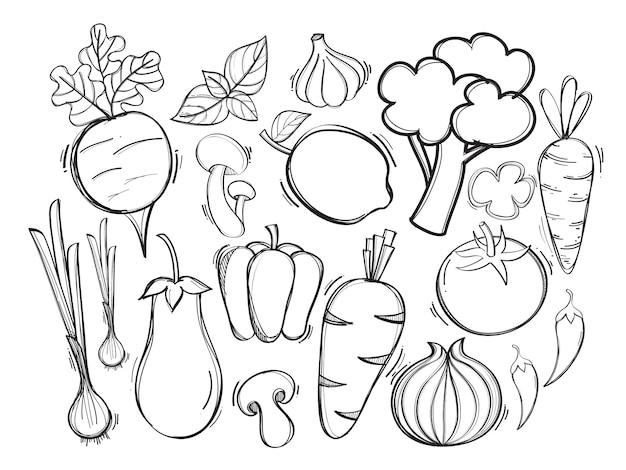 Hand gezeichnete illustration mit organischem gemüse des vektors