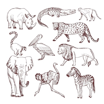Hand gezeichnete illustrationen von afrikanischen tieren