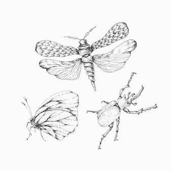 Hand gezeichnete insekten gesetzt, isolierte monochromatische vektorelemente.