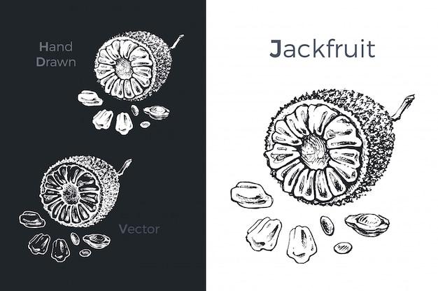 Hand gezeichnete jackfruchtikonen.