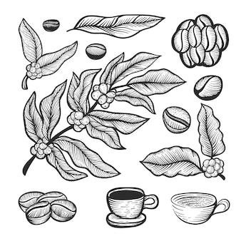 Hand gezeichnete kaffeebohnebaum sammlung