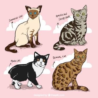 Hand gezeichnete katzenrassen pack
