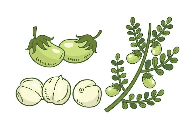 Hand gezeichnete kichererbsenbohnen und pflanze