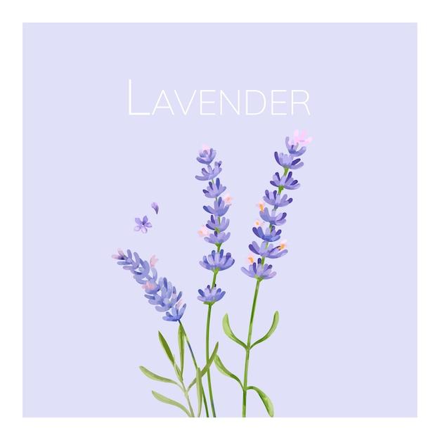 Hand gezeichnete lavendelblumenillustration
