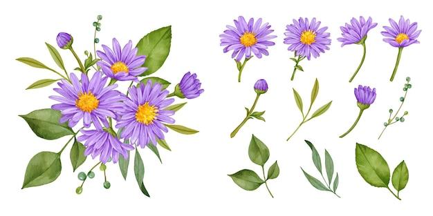 Hand gezeichnete lila aster blumenstrauß sammlung