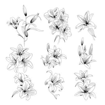 Hand gezeichnete lilie