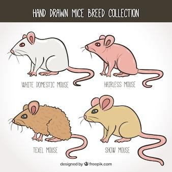Hand gezeichnete mäuse packen