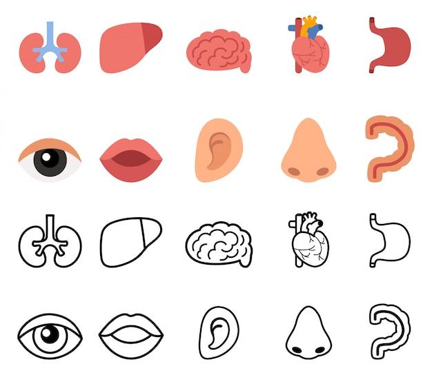 Hand gezeichnete menschliche organe