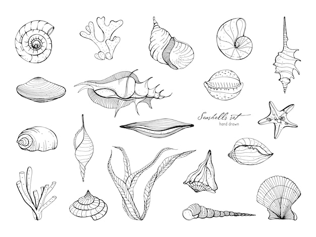 Hand gezeichnete muschelsammlung. satz von seetang, koralle, seestern, muschel. schwarzweiss-illustration.