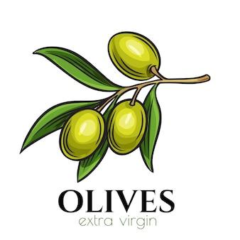 Hand gezeichnete olivenikone