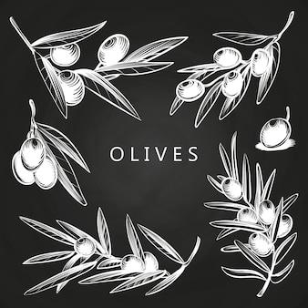 Hand gezeichnete olivenzweige auf tafel