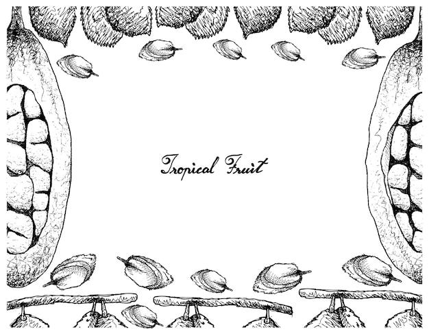 Hand gezeichnete rahmen von charichuelo und baobab fruits