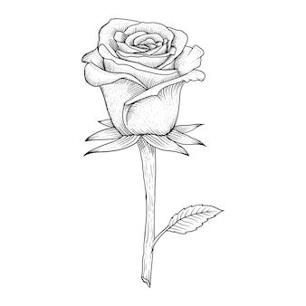 Hand gezeichnete rosen illustration premium