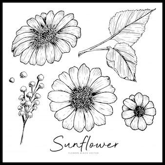 Hand gezeichnete sammlung der sonnenblumen. isoliertes blumenmusterelement durch tintenstiftskizze.