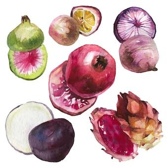 Hand gezeichnete sammlung von exotischen früchten im aquarellstil.
