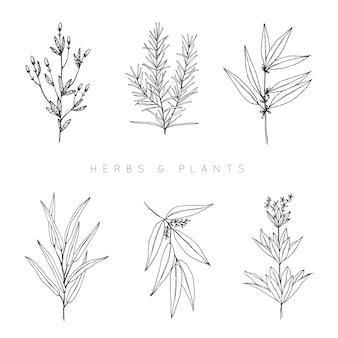Hand gezeichnete sammlung von kräutern und pflanzen