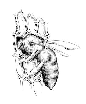 Hand gezeichnete skizze der biene auf bienenwaben