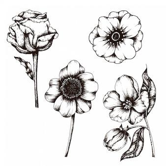 Hand gezeichnete skizze der blumen-weinlese-artsammlung