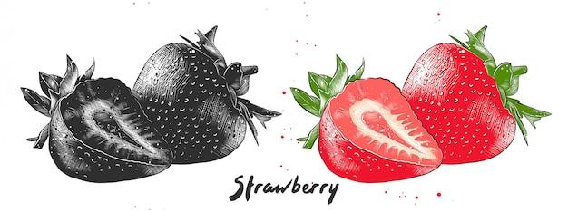 Hand gezeichnete skizze der erdbeere