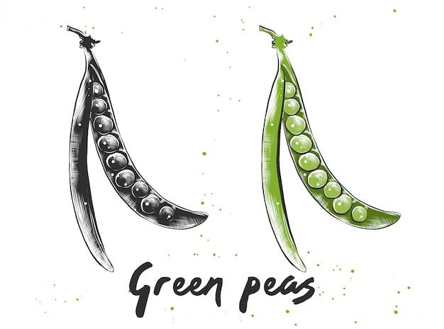 Hand gezeichnete skizze der grünen erbsen