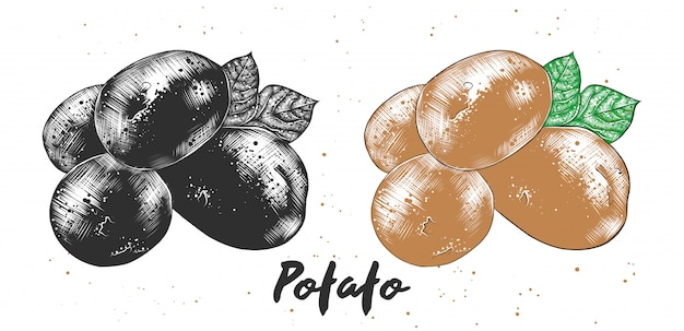 Hand gezeichnete skizze der kartoffel