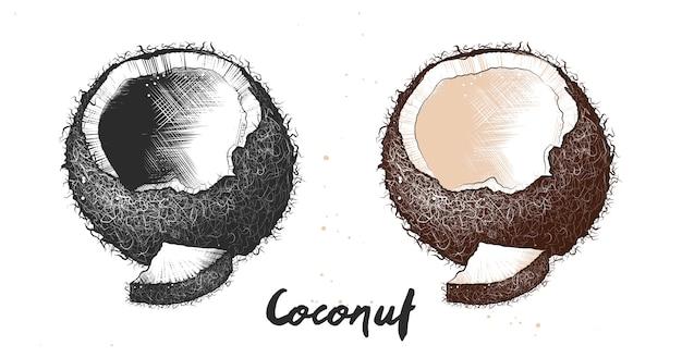 Hand gezeichnete skizze der kokosnuss