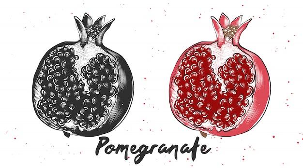 Hand gezeichnete skizze des granatapfels