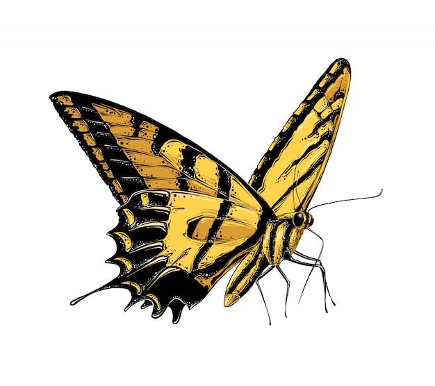 Hand gezeichnete skizze des schmetterlinges in der gelben farbe. isoliert