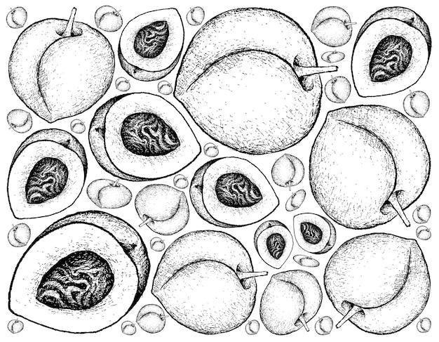 Hand gezeichnete skizze pfirsich, nektarine oder runus persica früchte.