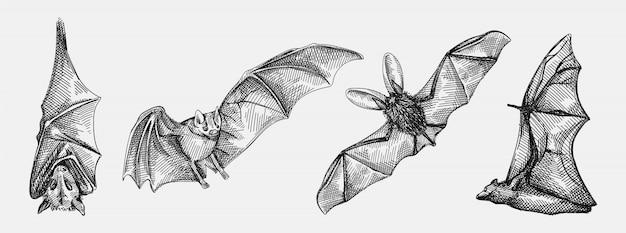 Hand gezeichnete skizze satz fledermäuse. das set besteht aus einer fliegenden fledermaus, einer fledermaus, die kopfüber hängt, einer vorderansicht der fledermaus und einer fledermaus von hinten