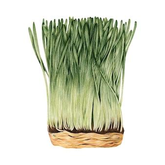 Hand gezeichnete skizze von wheatgrass